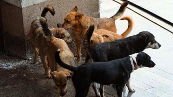 Кој е виновен за смртта на детето искасапено од кучиња