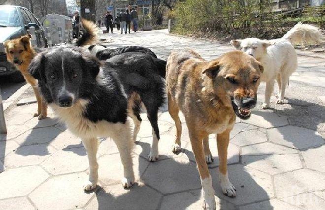 Во кичевско Бачишта уште еден напад од глутница кучиња на мета возрасна жена
