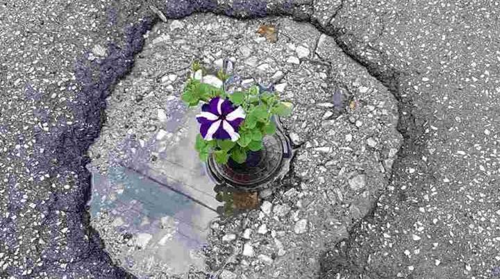 Дупките на Жерновски пополнети со цвеќиња од  Центар сака да дише