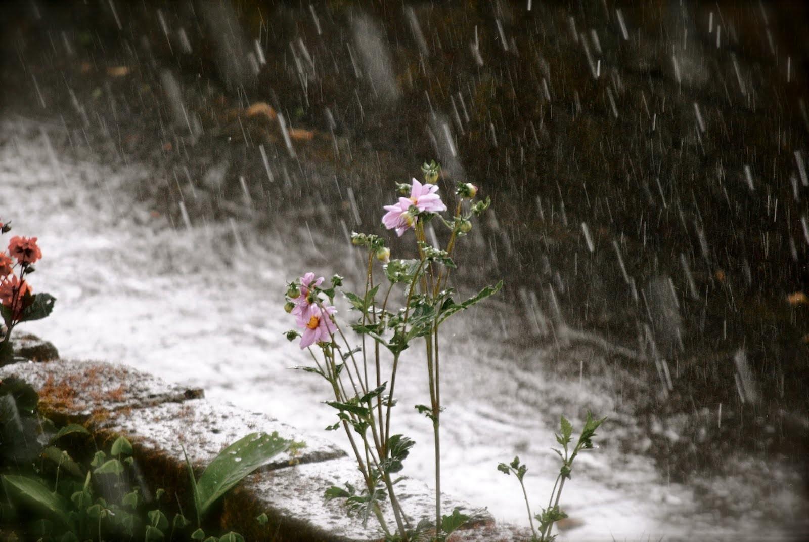 ВРЕМЕ ЗА ВИКЕНДОТ  Сонце и дожд  а еве што се очекува од понеделник