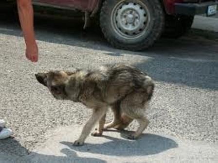Кучиња каснале старец на плоштадот во Скопје
